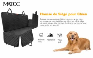 comment-transport-voiture-saint-bernard